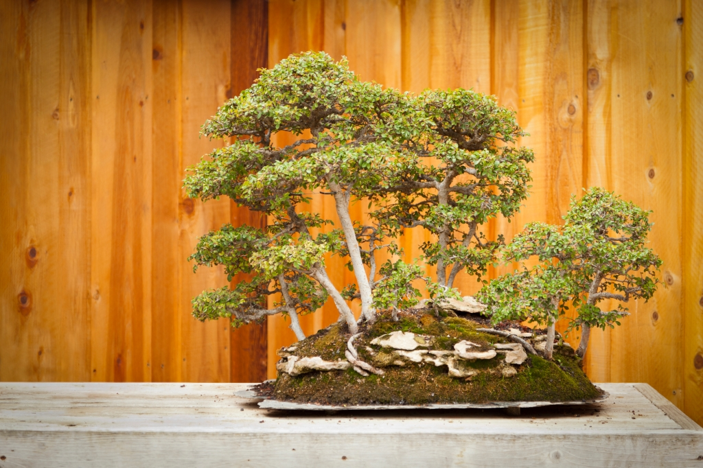 Bonsai And Business G Inspired