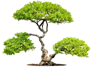 Bonsai and business.